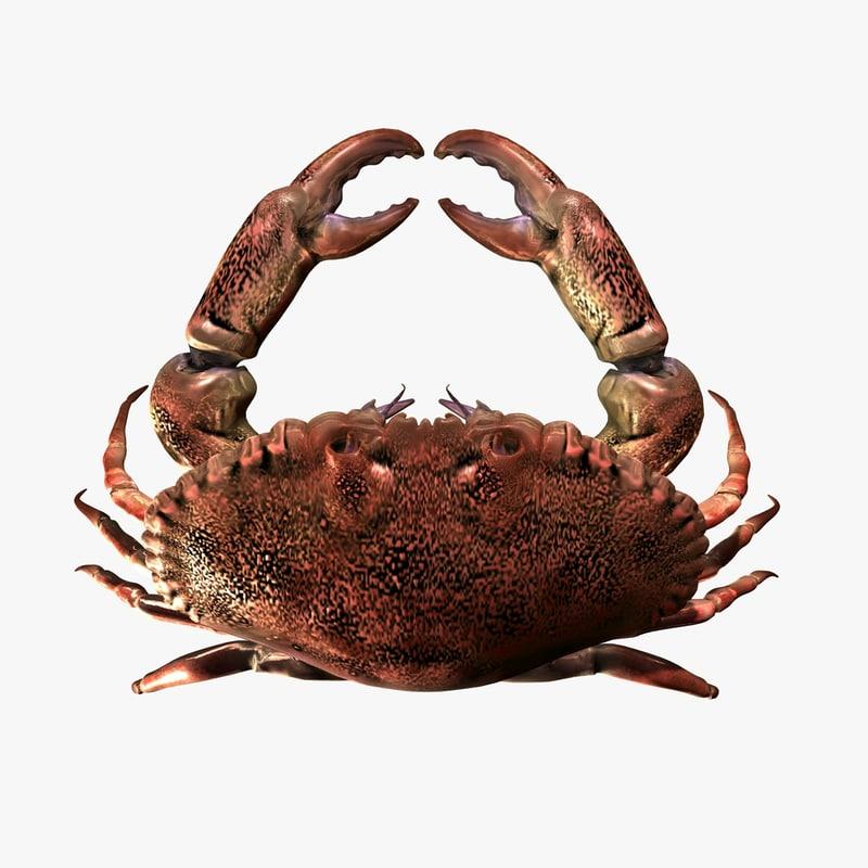 Crab-gfCM01a.jpg