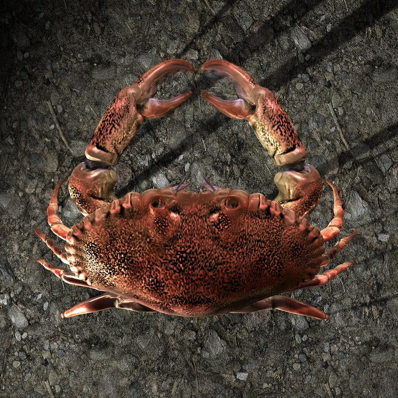 Crab-gfCM01b.jpg