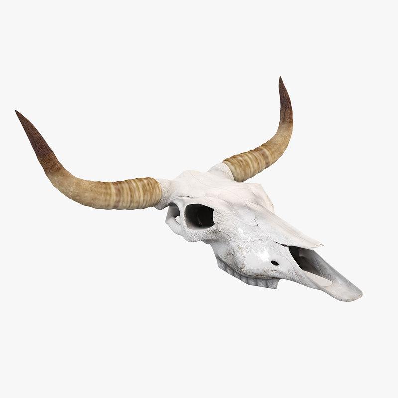 Cow_skull-00.jpg