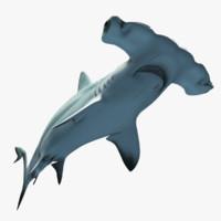 shark 3d models