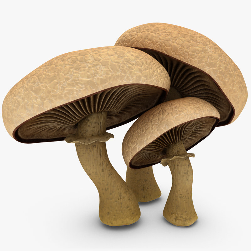 Mushrooms_Rr_01.jpg