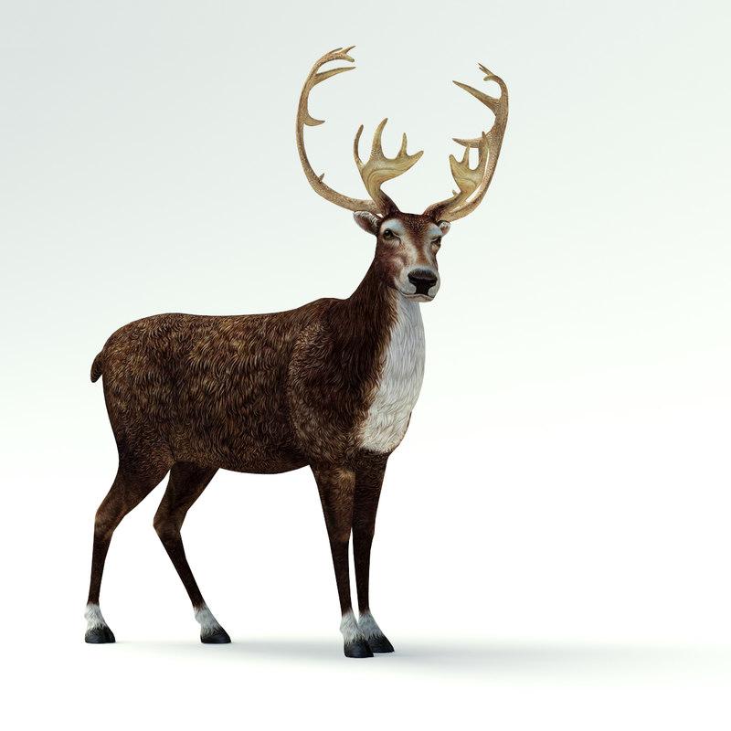 reindeer02.jpg