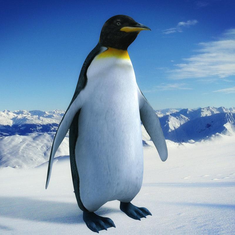Penguin_00_A.jpg