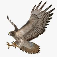 hawk 3D models