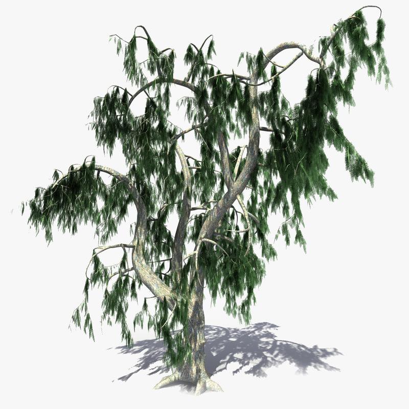 solarseas_acacia_tree-tt.jpg