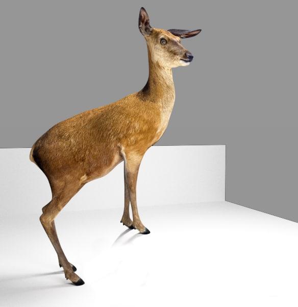 deer_rerig_standinghigh.png