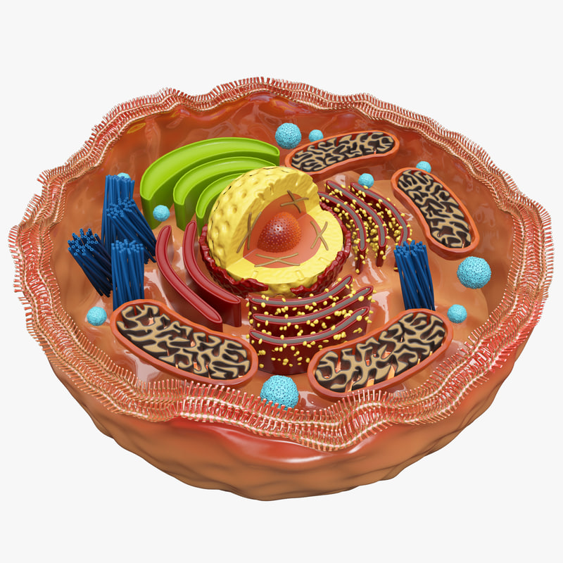 eukaryotic cell unlabeled - photo #12