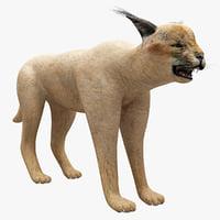 Caracal 3D models