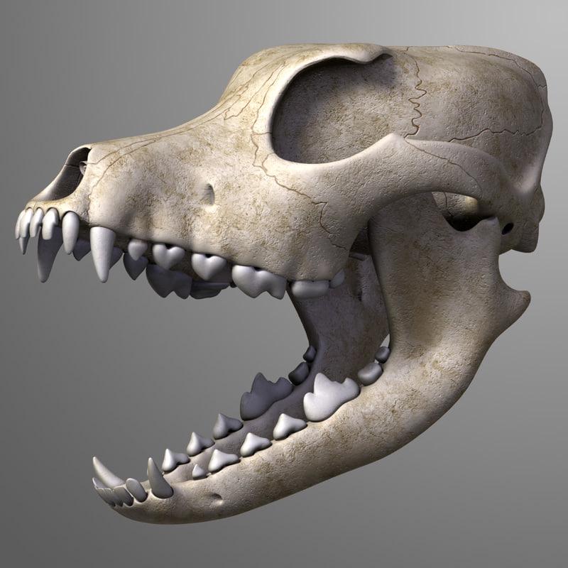 Dog_Skull_leo3dmodels_00.jpg
