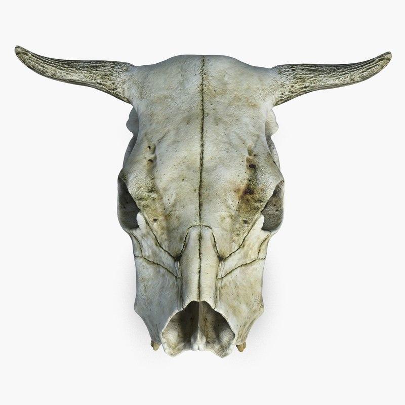 CowSkull_CheckMate-3.jpg