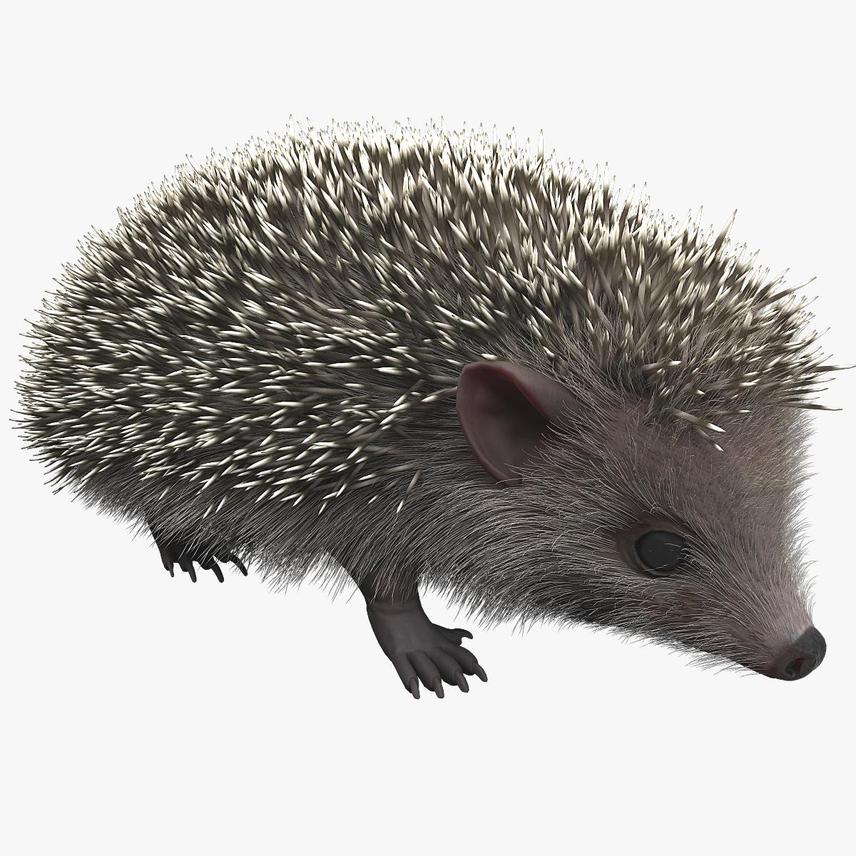 Hedgehog_000.jpg