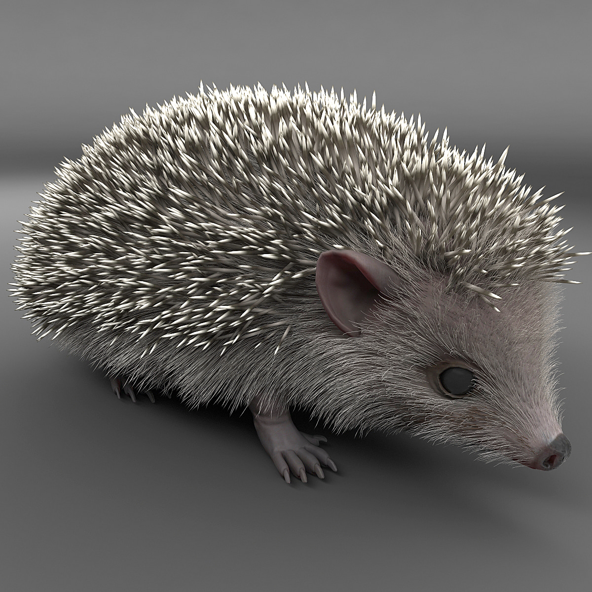 Hedgehog_001.jpg