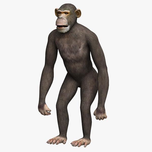 Chimp01.jpg