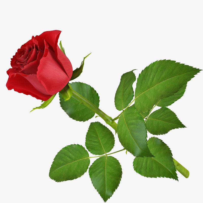 rose 11 3d model