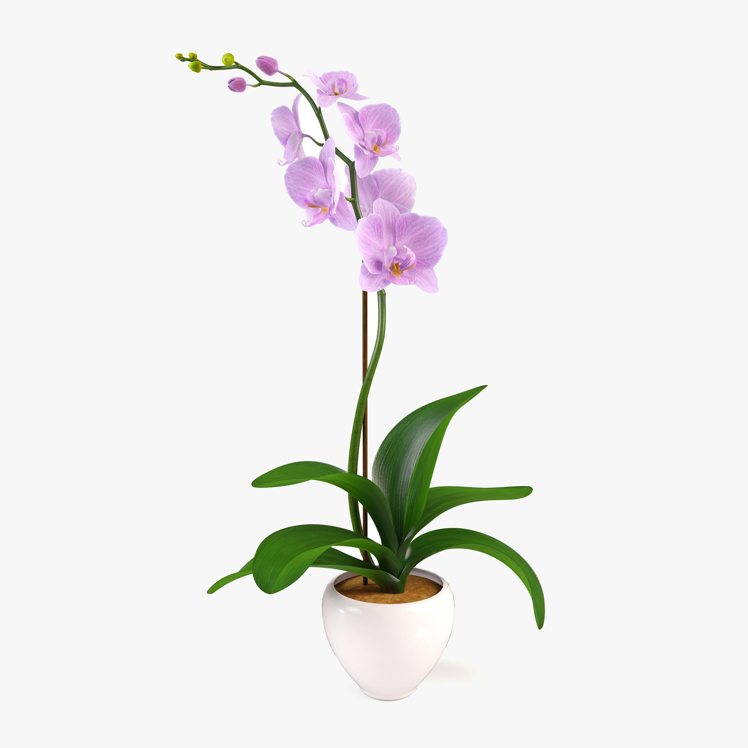 pr_orchid1.jpg
