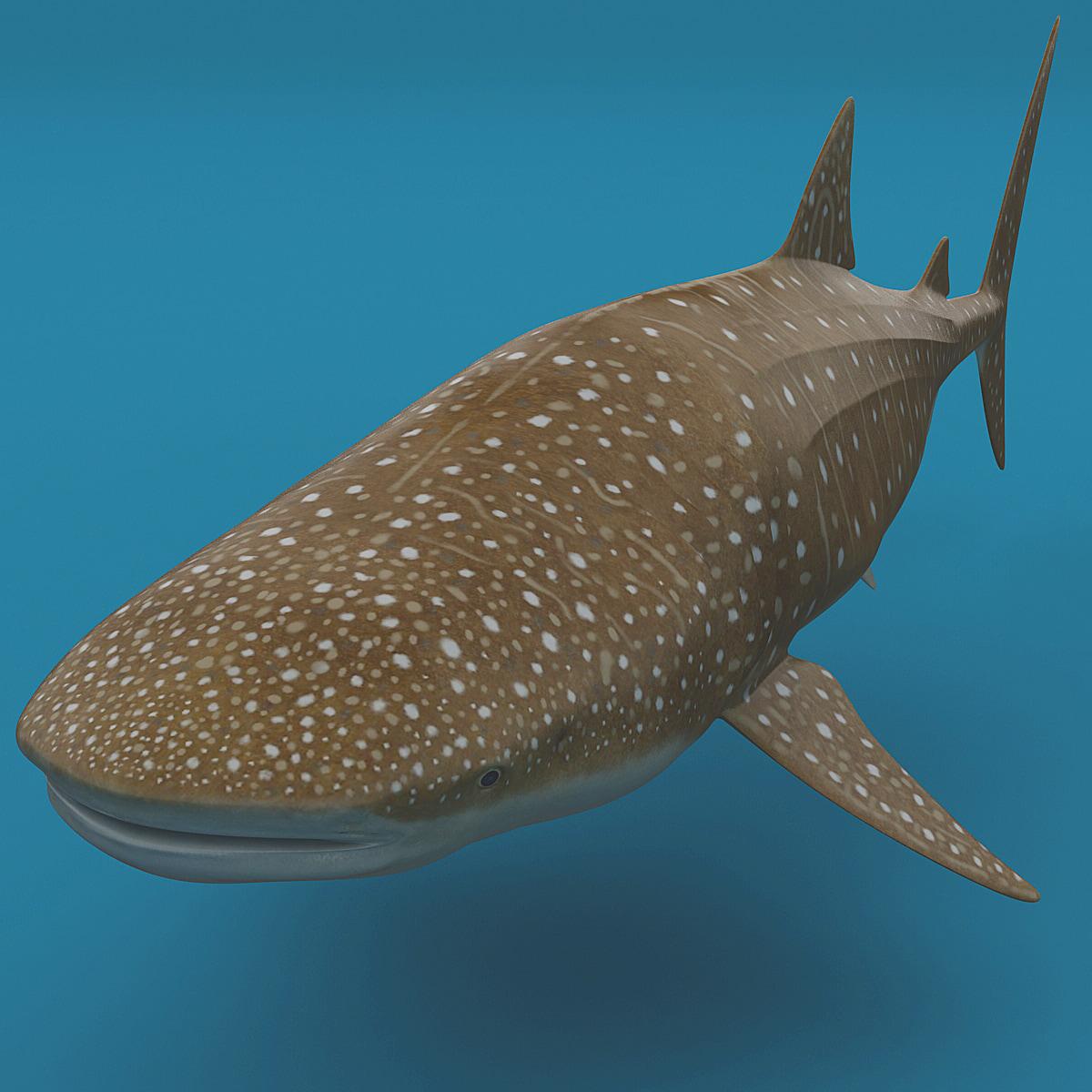 Whale_Shark_01.jpg