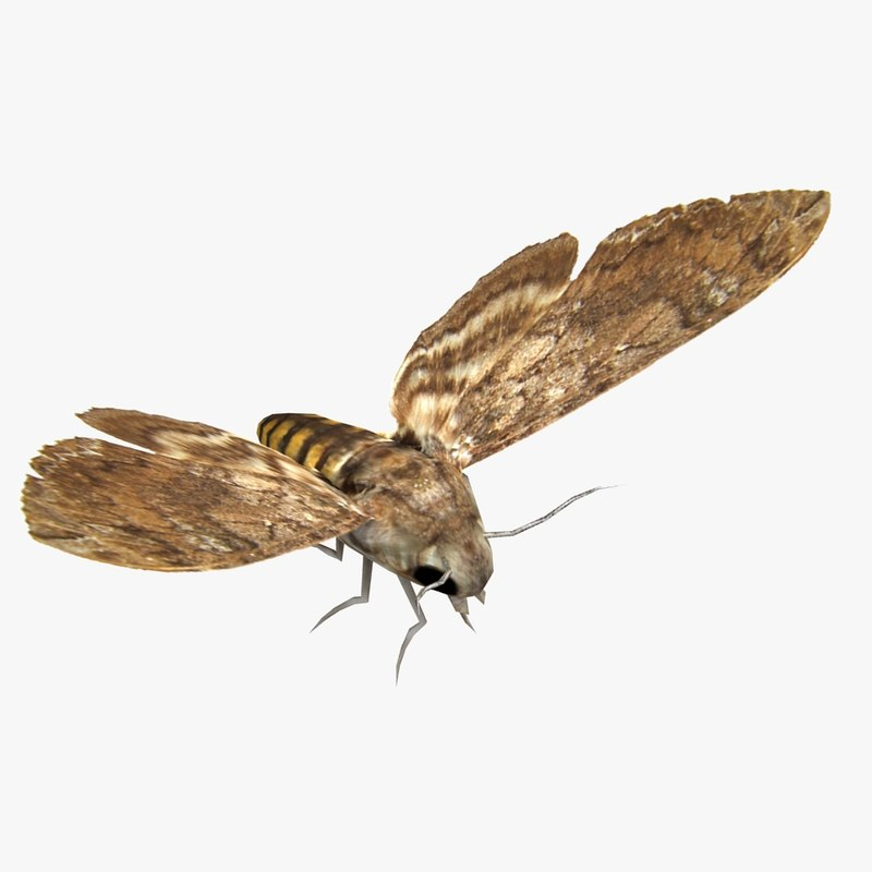 Moth_01.jpg