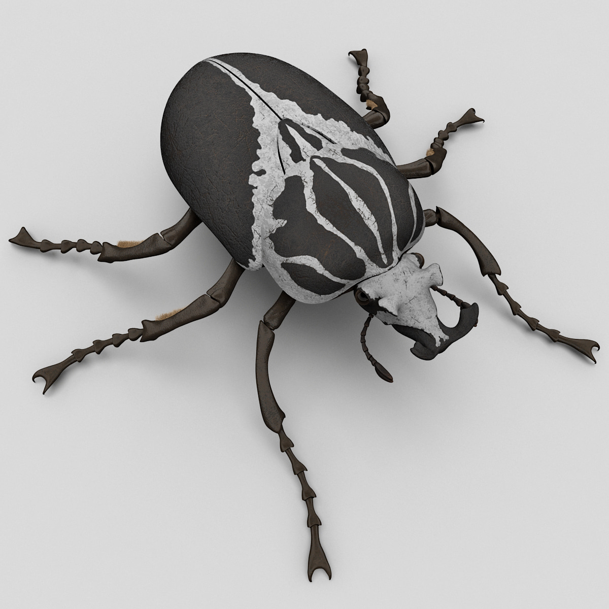 Goliath Beetle_0001.jpg