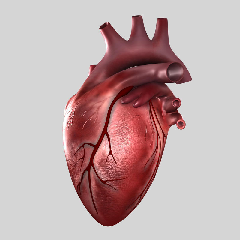 Heart-2nd-image.jpg