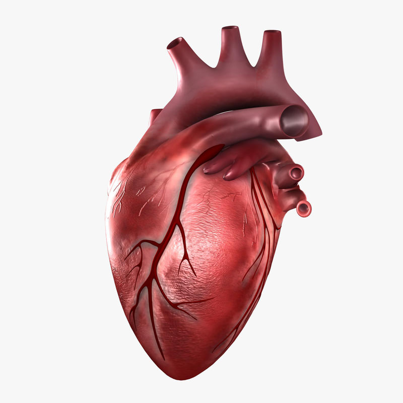 real human heart beating - photo #9