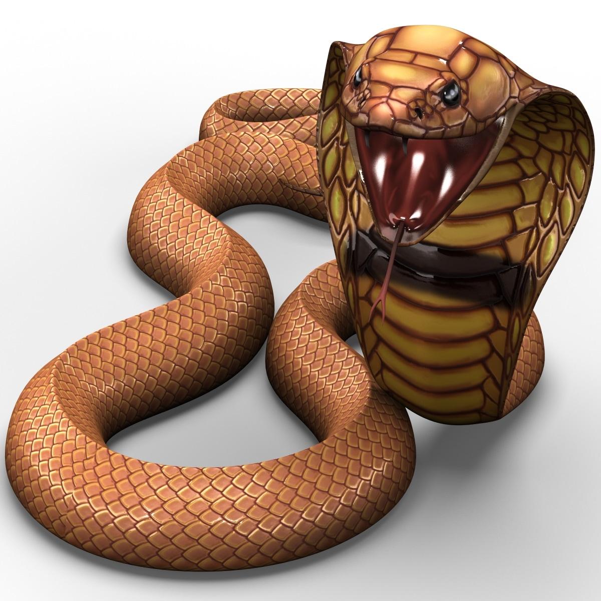 Snake_Cobra_Pose_6_001.jpg