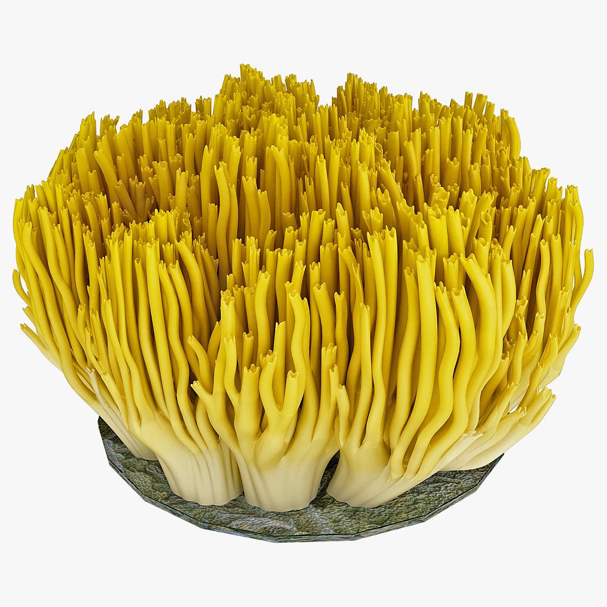 130662_Coral_Fungus_000.jpg