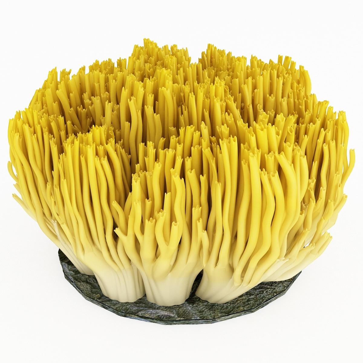 130666_Coral_Fungus_004.jpg