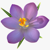 Crocus 3D models