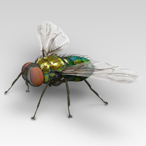 Fly Green