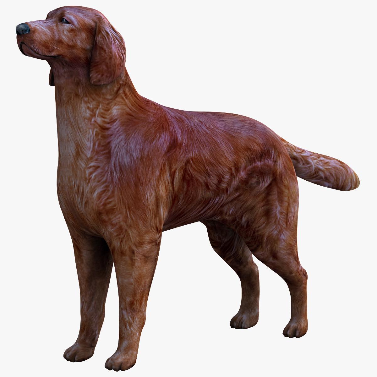 123417_Dog_Irish_Setter_000.jpg