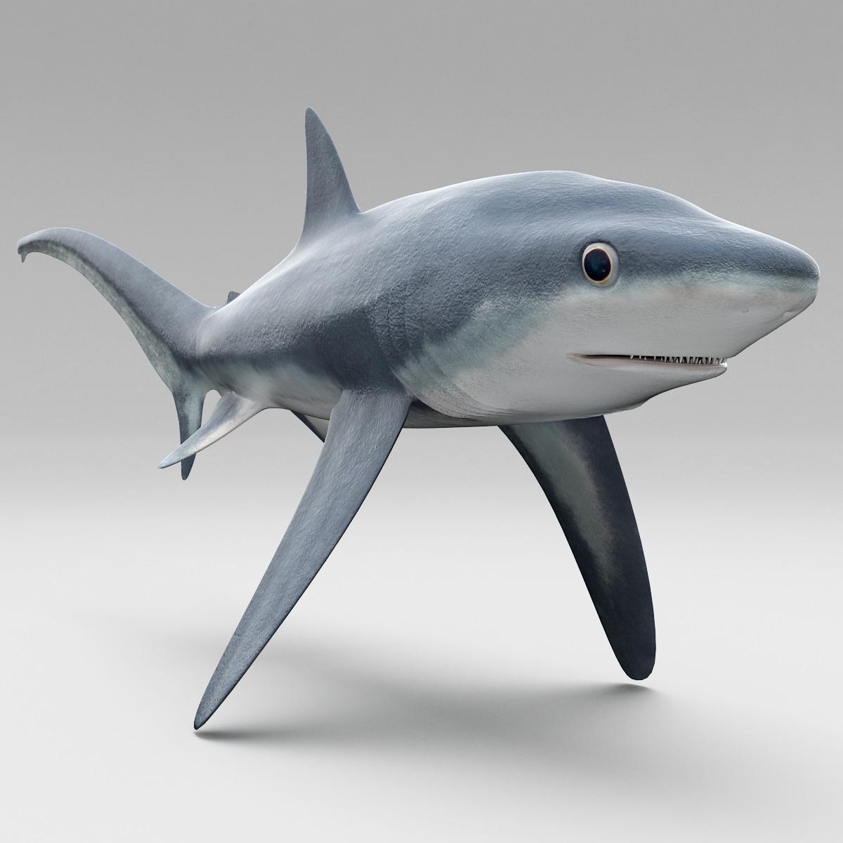 Fox Shark