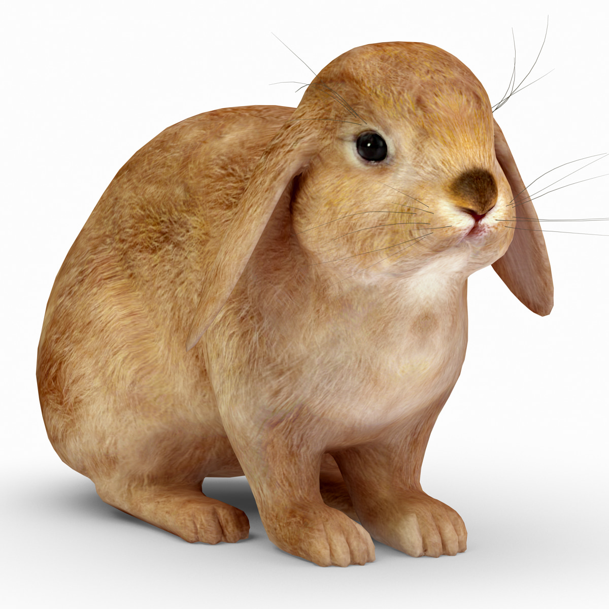 rabbit_red_001.jpg