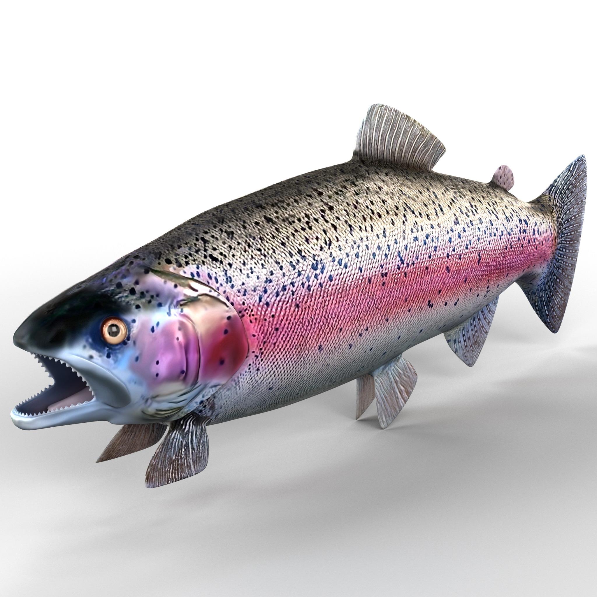 209580_Rainbow_Trout_001.jpg