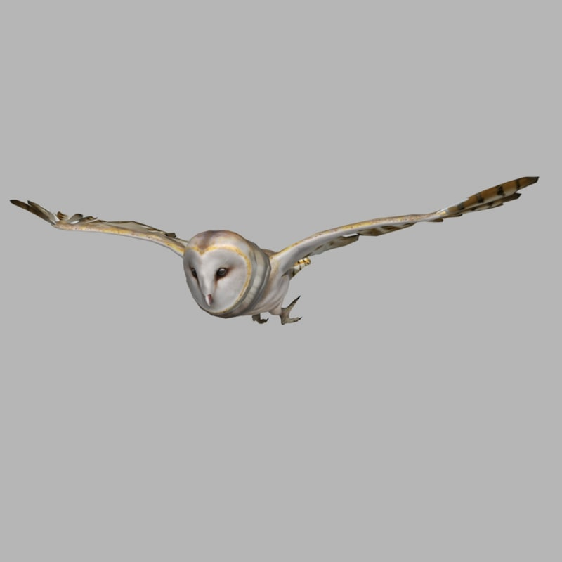 Barn Owl (ANIMATED)