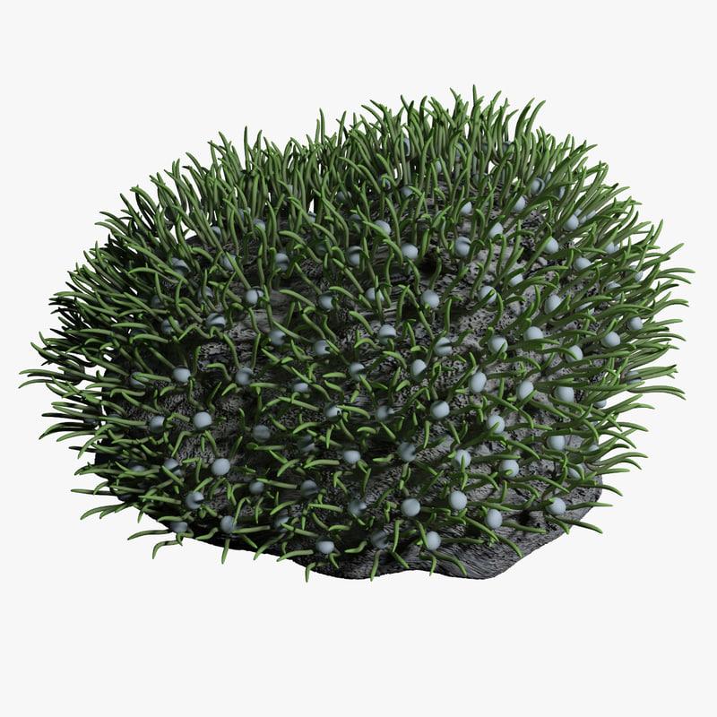 green xenia R1aa.jpg