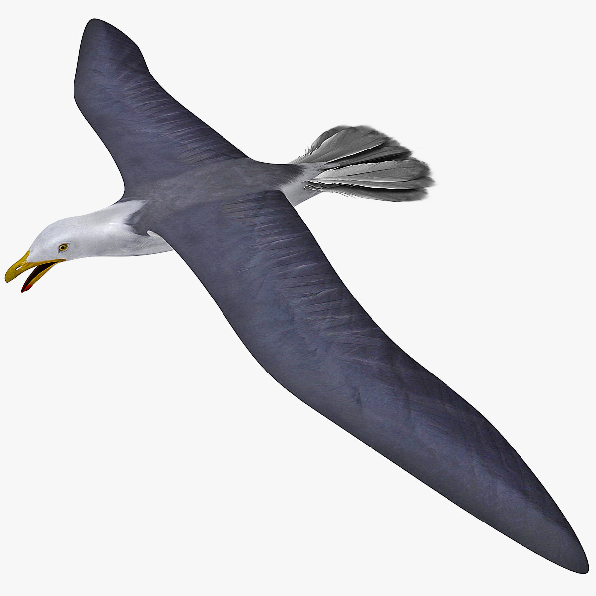 Gull_Flying_Rigged_0.jpg