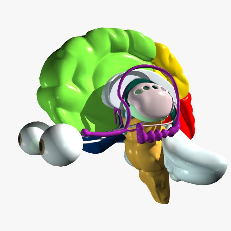 human_Brain_render_01.jpg