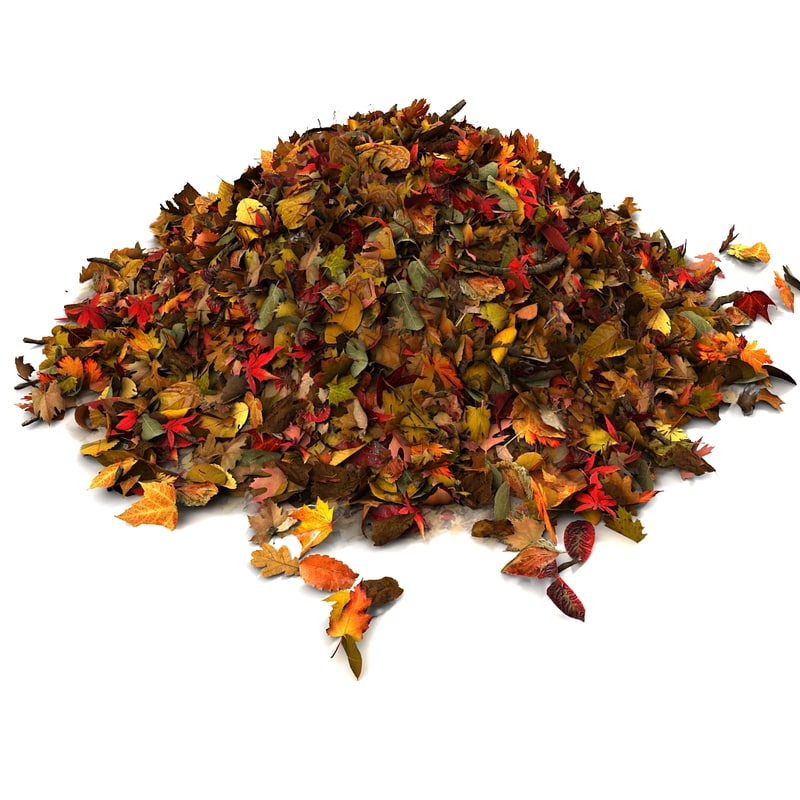 Pile of colourful leaves