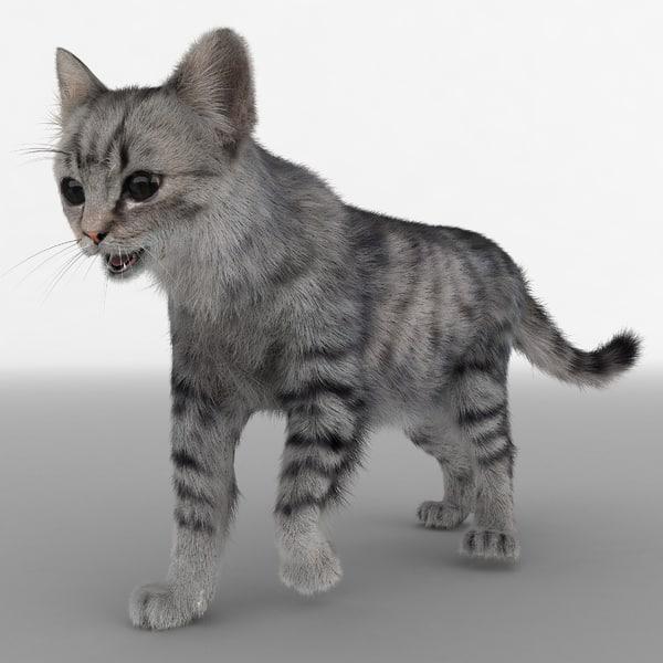 Cat 3 Pose 1 Fur 3D Models