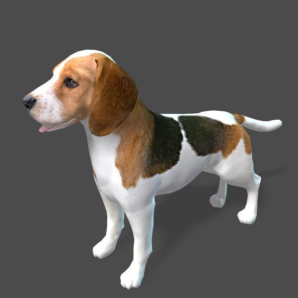 Real-Time Dog Beagle