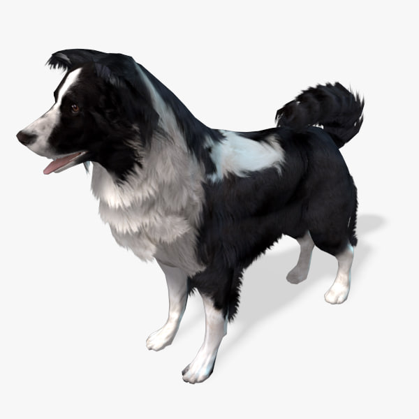 border-collie-preview-01.jpg