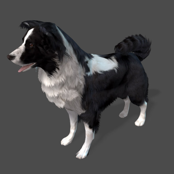 border-collie-preview-02.jpg