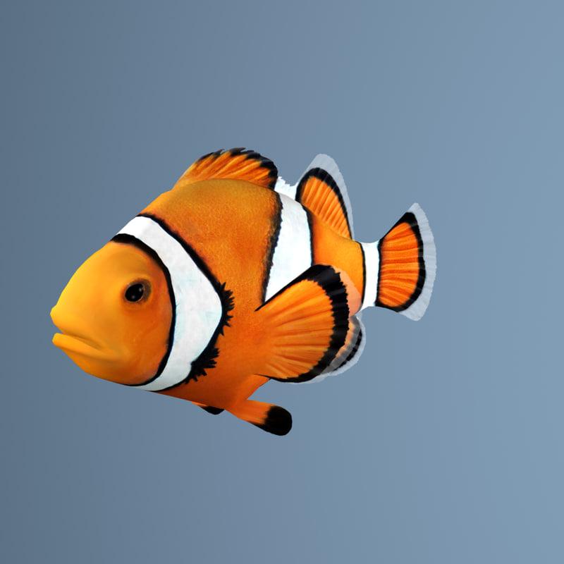 3d clownfish clown fish model