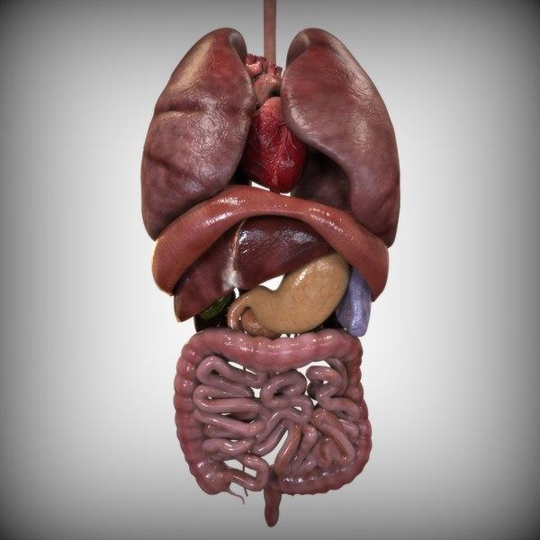 Internal Organs 3D Models