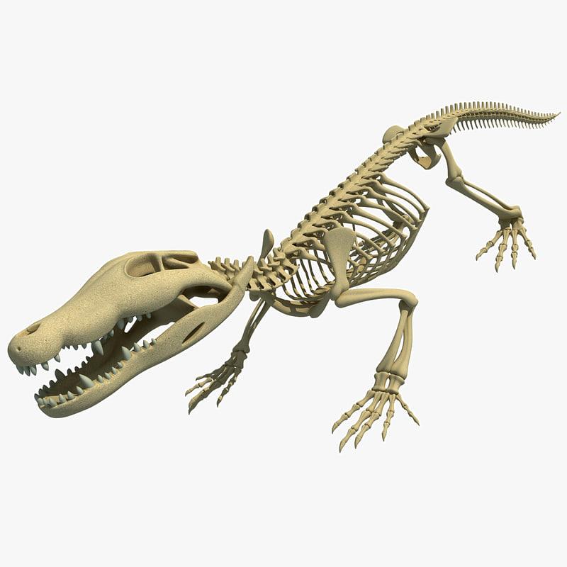 Crocodile skeleton - photo#25