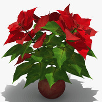 poinsettia 3D models
