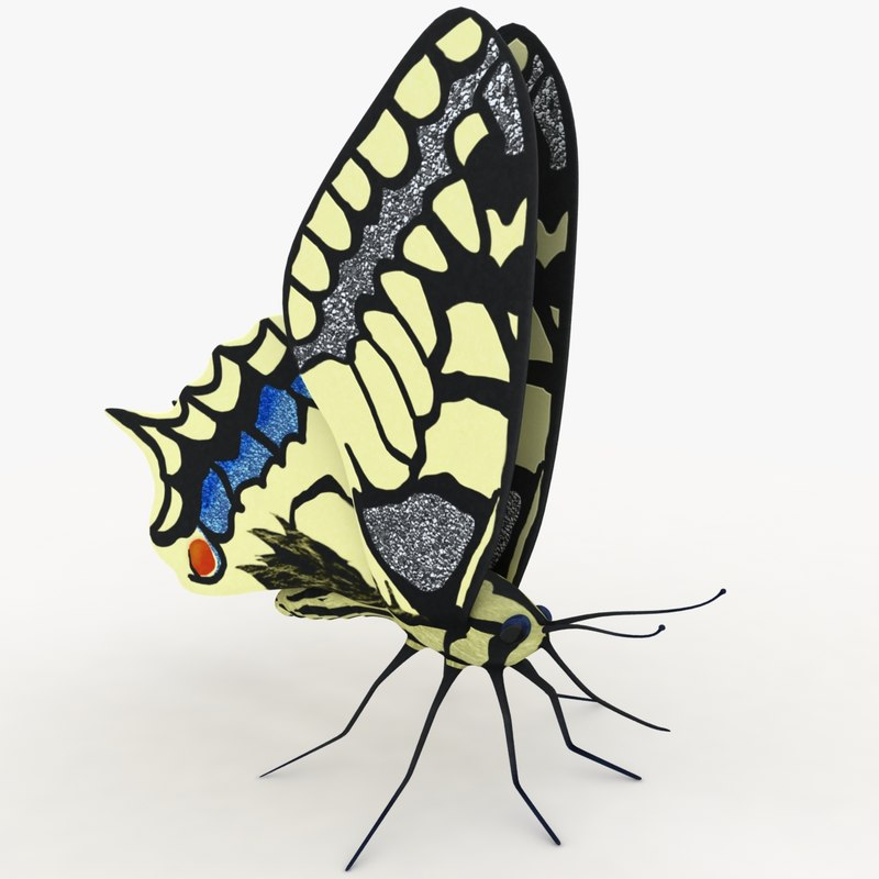 Butterfly Papilio machaon (RIGGED)