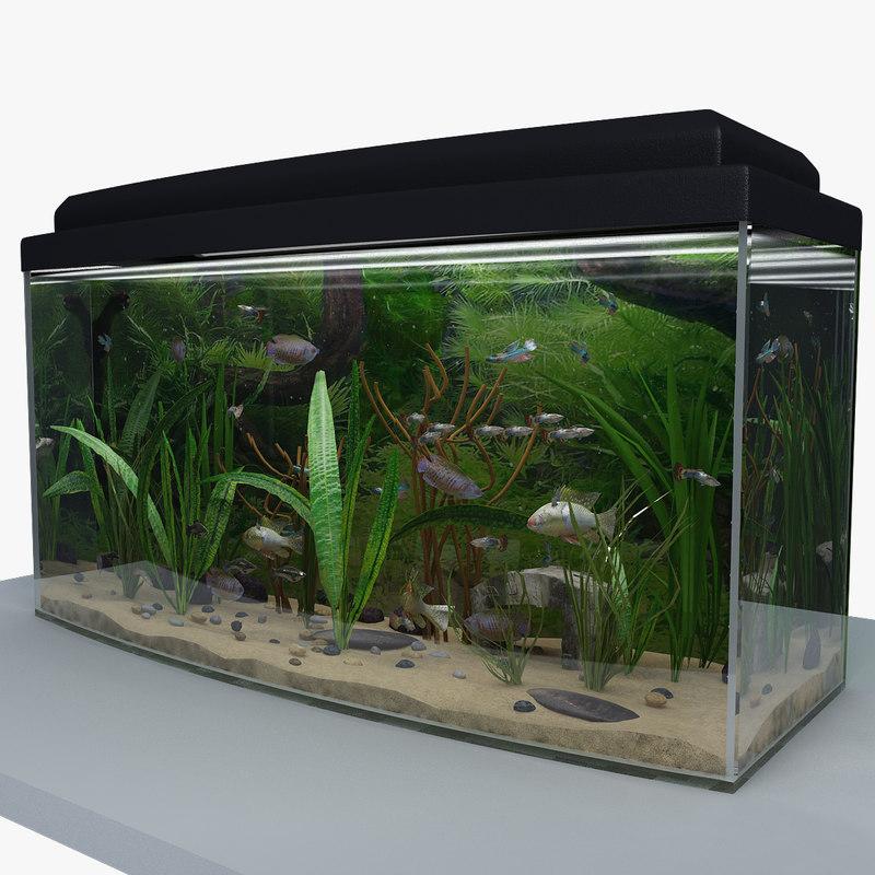 render_aquarium_2_vray_0.jpg