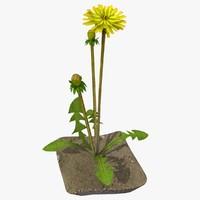 dandelion 3D models