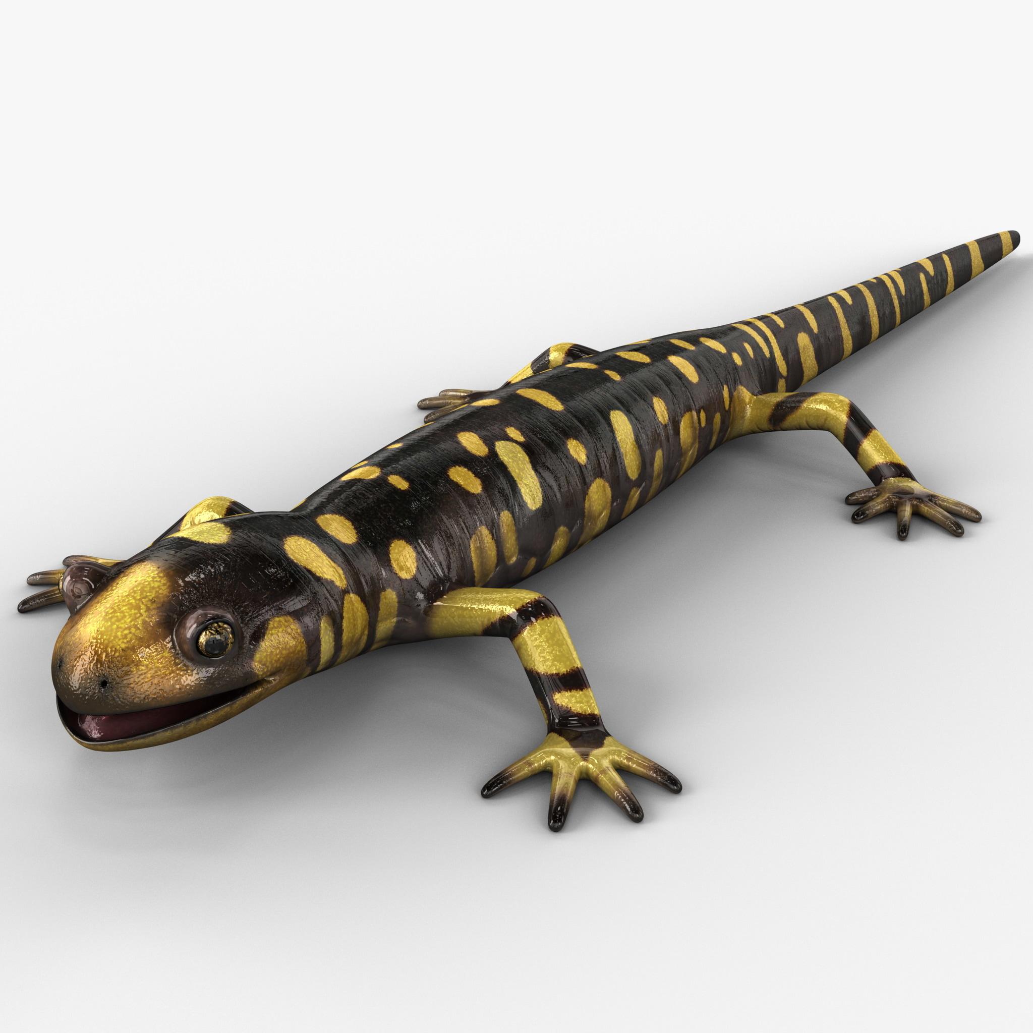 Tiger Salamander Rigged